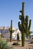 Hogar y Saguaro de Arizona Fotografía de archivo