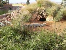 Hogares de la naturaleza del cocodrilo del parque zoológico de la playa Fotos de archivo libres de regalías