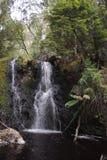 Hogarth nedgångar, Strahan, Tasmanien Arkivbilder