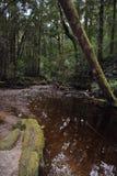 Hogarth nedgångar, Strahan, Tasmanien Arkivbild