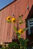 Hogback-Blumen 1 Stockbilder