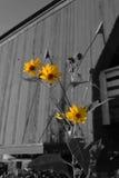 Hogback-Blumen Stockfotos