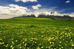 Hoge bergen Tatras in Slowakije Royalty-vrije Stock Afbeeldingen