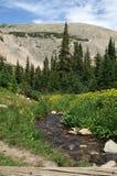 Hoge bergstroom met wildflowers Royalty-vrije Stock Afbeelding