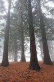 Hoge bomen in bos royalty-vrije stock afbeeldingen