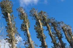 Hoge bomenachtergrond Royalty-vrije Stock Fotografie