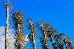 Hoge bomenachtergrond Royalty-vrije Stock Foto
