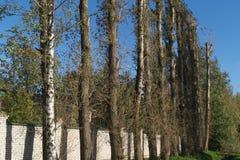 Hoge bomenachtergrond Royalty-vrije Stock Foto's
