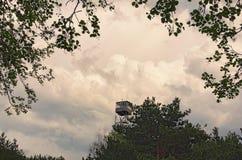 Hoge brandtoren in de bos Grijze onweerswolken op achtergrond Volyngebied ukraine Royalty-vrije Stock Foto