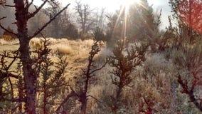 Hoge de Woestijn ijzige ochtend van de de herfstmist stock foto's
