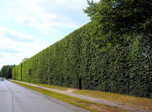 Hoge ecologische groene muurhaag Royalty-vrije Stock Foto