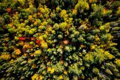 Hoge hoekmening van een Bos in de Herfst royalty-vrije stock fotografie
