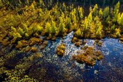 Hoge hoekmening van wildernis van hierboven royalty-vrije stock afbeelding