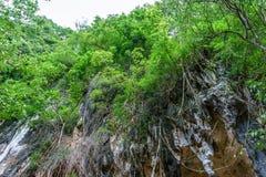 Hoge klip in bos met stalactiet royalty-vrije stock fotografie
