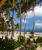 Hoge palmen op het Caraïbische strand Stock Afbeeldingen