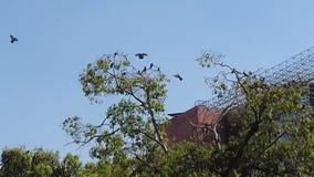 Hoge plaatsbomen wat betreft hemel Stock Foto's