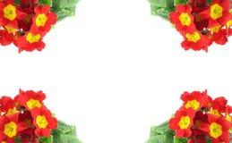 Hoge resolutieframe dat met mooie levendige bloemen wordt verfraaid Stock Afbeelding