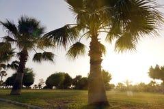 Hoge rijen van palmen langs het voetpad Mooie mening van de subtropen stock afbeelding
