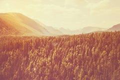 Hoge spar op de hellingen van de Altai-bergen Royalty-vrije Stock Fotografie