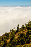 Hoge Wolken over het Bos van Denneappelbomen Royalty-vrije Stock Fotografie