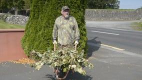 Hoger mannetje in tuin dragende het opruimen geharkte bladeren in kruiwagen stock videobeelden