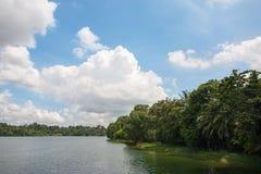 Hoger Seletar-Reservoir in Singapore Stock Afbeelding