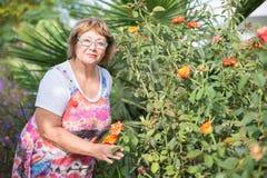 Hogere dame met haar installaties in de tuin Stock Foto's