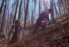 Hogere houthakkers die bomen snijden Royalty-vrije Stock Foto's