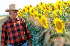 Hogere landbouwer die zich op een gebied bevinden Stock Afbeeldingen