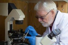 Hogere mannelijke onderzoeker die wetenschappelijk onderzoek naar een laboratorium uitvoeren stock afbeelding