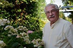 Hogere mens met bloeiende hydrangea hortensia stock foto