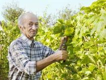 Hogere mensen scherpe wijnstok royalty-vrije stock afbeeldingen