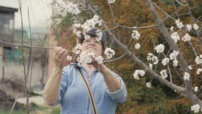 Hogere vrouw die bloeiende appelboom tijdens het tuinwerk kijken in boomgaard stock footage