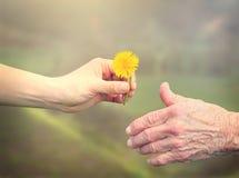 Hogere vrouw die een bloem met jonge vrouw delen royalty-vrije stock afbeelding