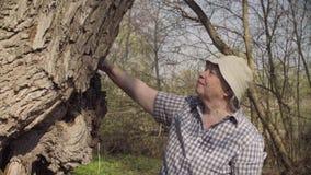 Hogere vrouw die een grote boom strijken stock footage