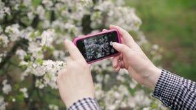 Hogere vrouw die een tot bloei komende boom op een smartphone fotograferen stock video