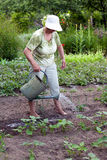 Hogere vrouw die in tuin werkt stock fotografie