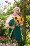 Hogere vrouw die zich met zonnebloemen in tuin bevinden Royalty-vrije Stock Foto's