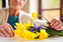 Hogere vrouw door het boeket van de vensterholding van gele narcissen Royalty-vrije Stock Afbeeldingen
