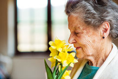 Hogere vrouw door het venster ruikende boeket van gele narcissen Royalty-vrije Stock Foto's