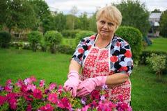 Hogere vrouw in handschoen en schort het tuinieren kleurrijke bloemen Stock Afbeeldingen
