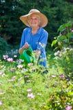 Hogere Vrouw het Water geven Bloeminstallaties bij de Tuin stock foto's