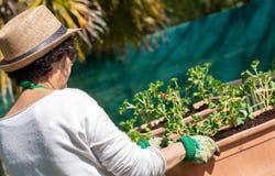 Hogere vrouwenpotting geraniumbloemen, in openlucht stock foto