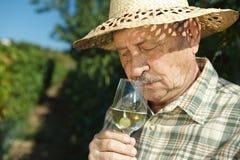 Hogere wijnhandelaar het testen wijn Stock Fotografie