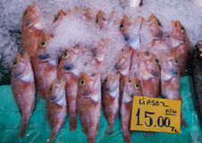 Hogfish for sale in street market, Istanbul Royalty Free Stock Image