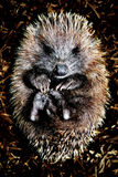 Hoglet. Harbour-side creamery operating its night-shift in a small coastal Scottish town Royalty Free Stock Photography