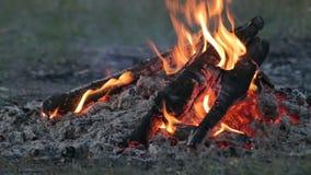 Hoguera ardiendo en la naturaleza, turistas en el campo, última tarde del verano metrajes