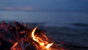 Hoguera ardiente en la playa, tarde del verano Hoguera en naturaleza como fondo Madera ardiente en la orilla blanca de la arena e metrajes