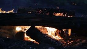 Hoguera de la noche en el vídeo muerto de la cantidad de la acción del bosque almacen de metraje de vídeo