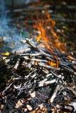 Hoguera en bosque Imagen de archivo